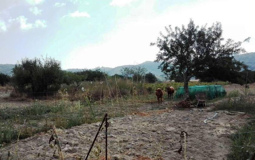 Ανακοίνωση Συλλόγου Καρσάνων Λευκάδος Αθήνας σχετικά με τις καταστροφές στον κάμπο της Καρυάς από ταανεπιτήρητα.