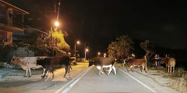Επιστολή Συλλόγου Καρσάνων Λευκάδος Αθήνας πρός τον Δήμαρχο Λευκάδας σχετικά με τα ανεπιτήρητα παραγωγικά ζώα στηΛευκάδα
